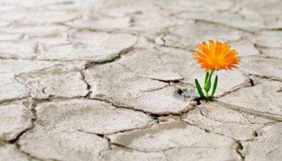 blossom where you are planted